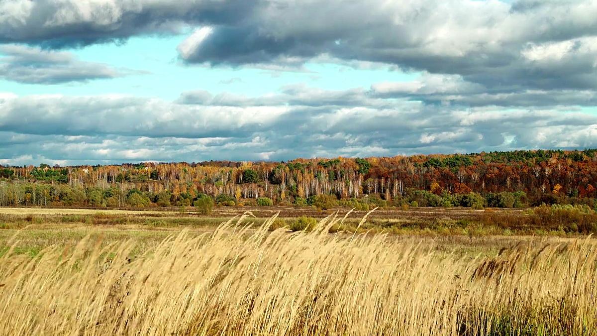 秋季田园风景场背景秋季森林。黄草在风中摇摆。五颜六色的树叶树。醇厚的秋天。秋天森林落叶。地球和生态的环境保护森林资源。气候变暖