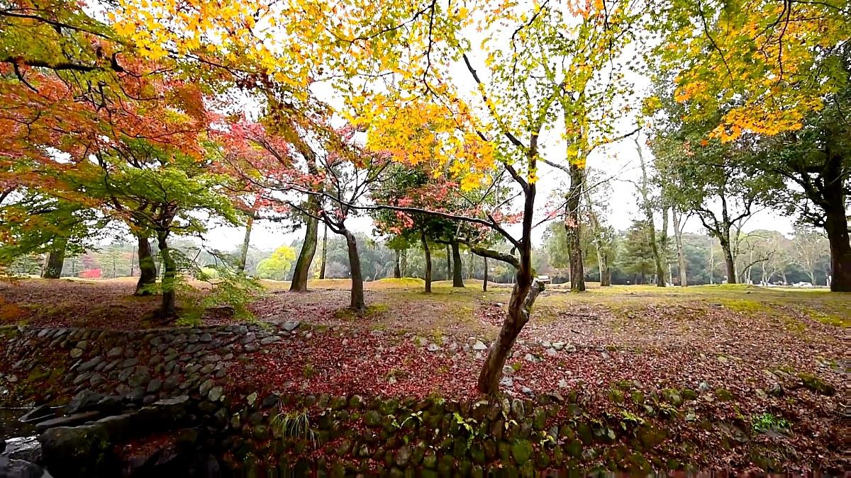 秋天在日本奈良公园。