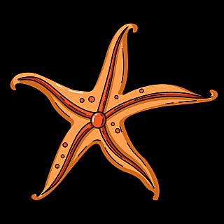 海洋生物元素主题素材-海星